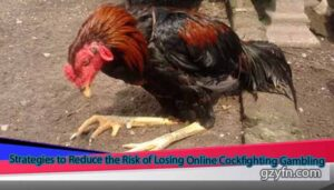 Strategies-to-Reduce-the-Risk-of-Losing-Online-Cockfighting-Gambling
